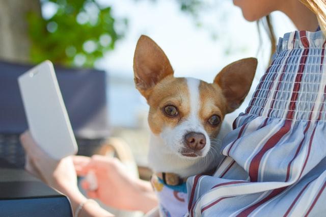 Presença de pets em casa é benéfico para saúde